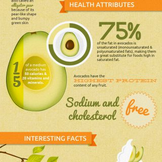 All About Avocados: An Avocado Facts Infographic