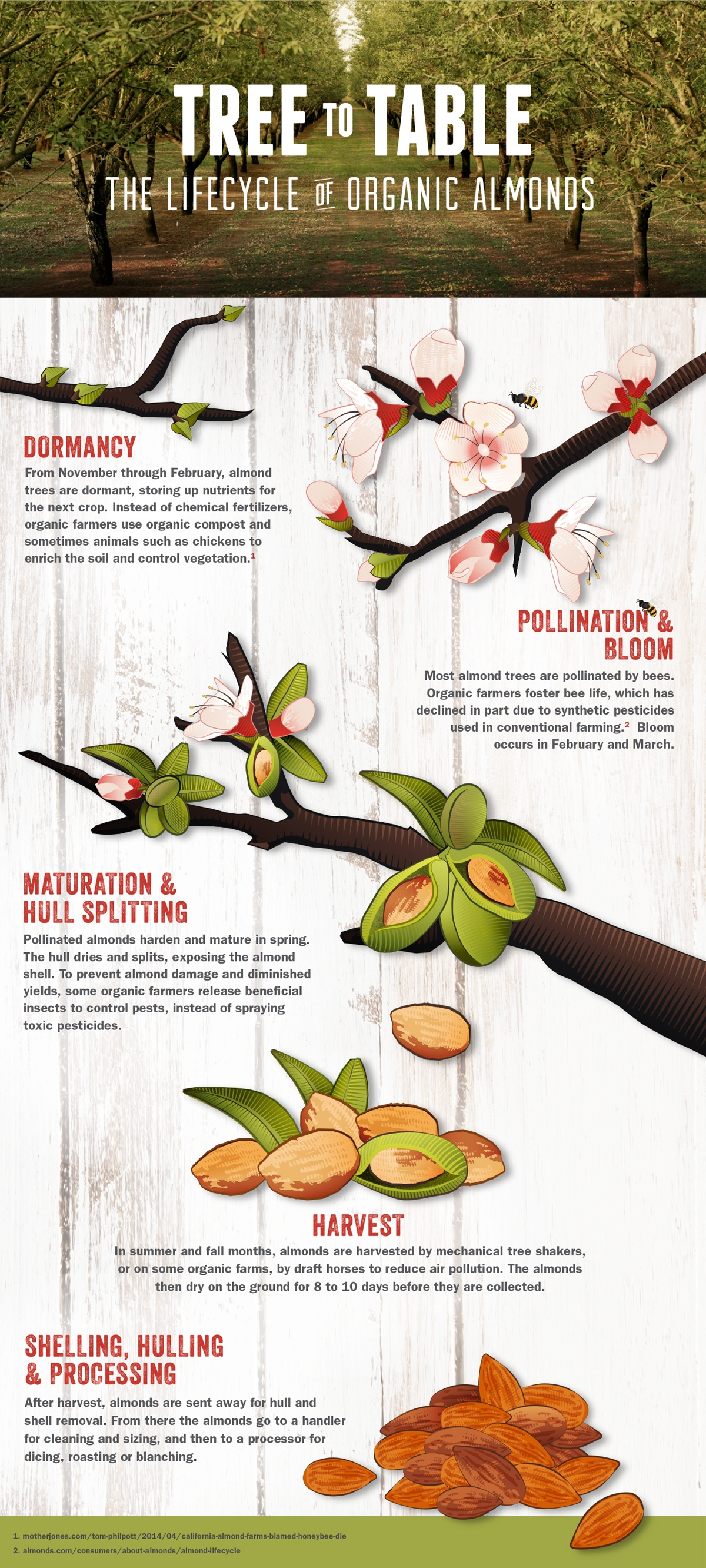 From Tree To Table: Lifecycle Of Organic Almonds | Best Food Infographics