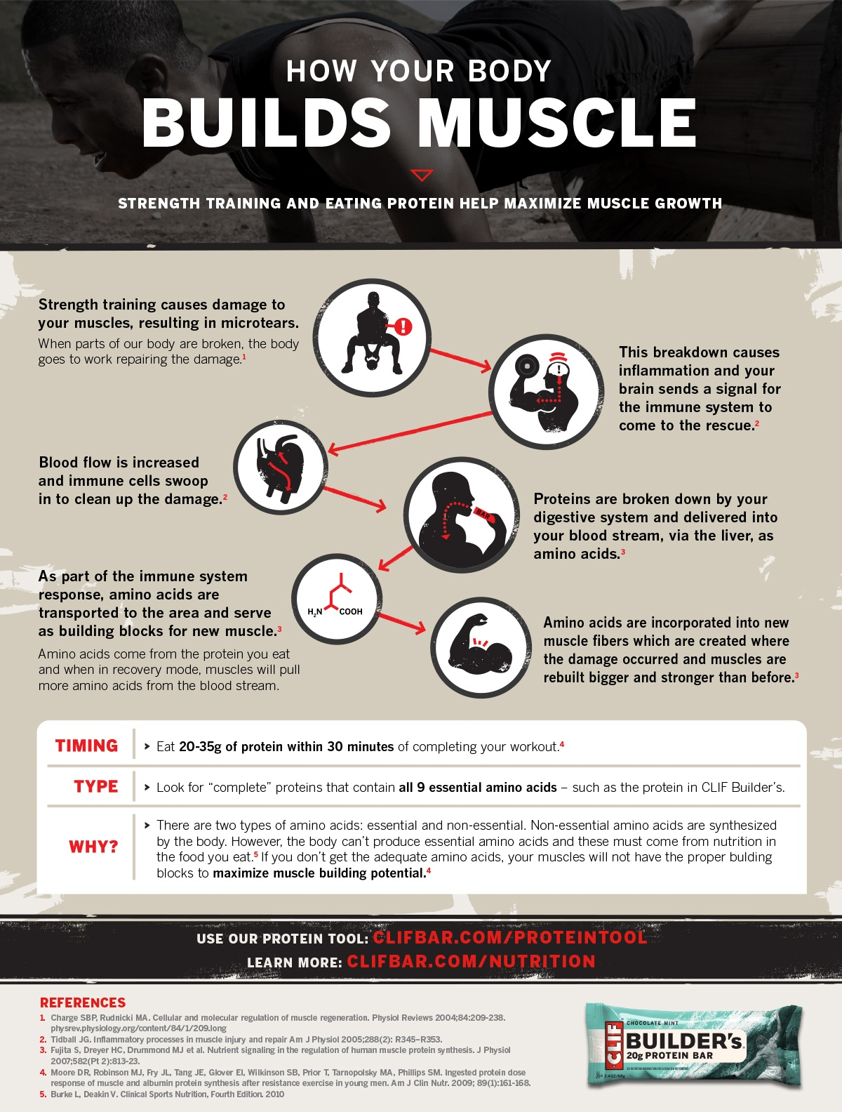 How Your Body Builds Muscle
